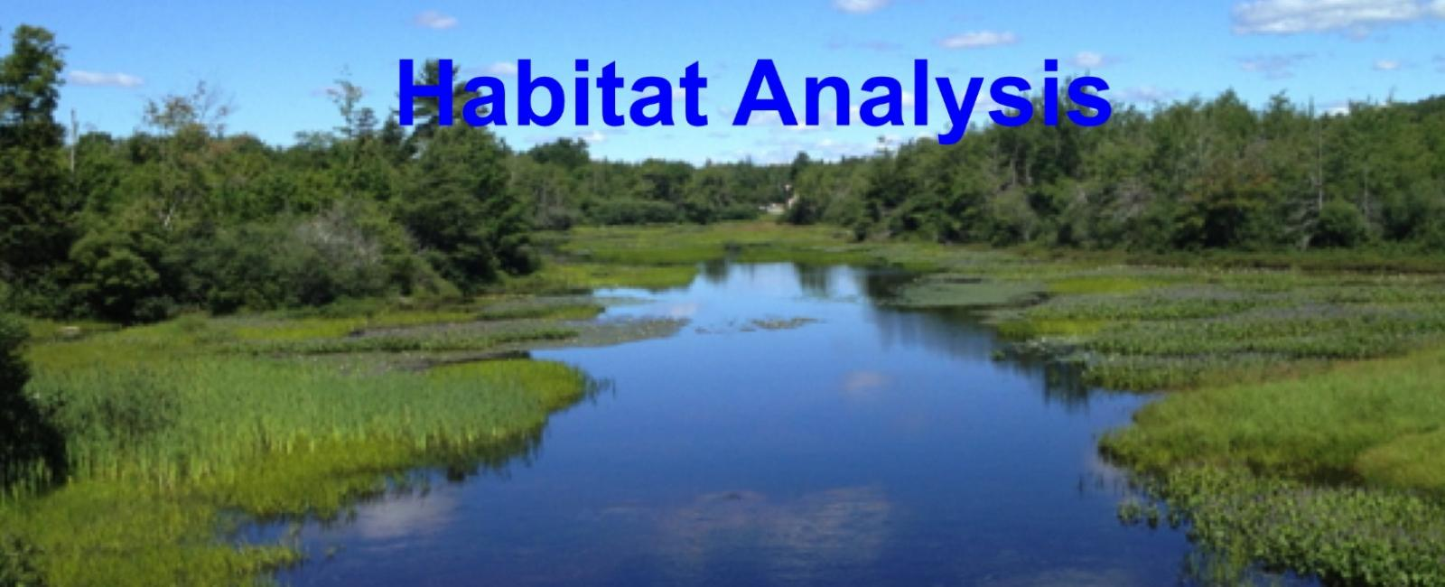 Habitat Analysis - stream through a bog